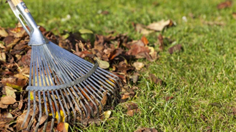 Осенний месячник по санитарной очистке города